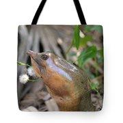 Florida Soft Shelled Turtle Tote Bag