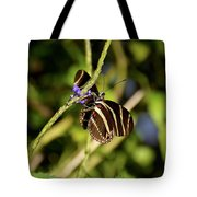 Florida State Butterfly Tote Bag