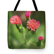 Florida Tasselflower Tote Bag