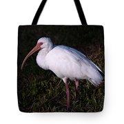 Florida White Ibis  Eudocimus Alba Tote Bag