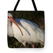 Florida White Ibis  Eudocimus Albus Tote Bag