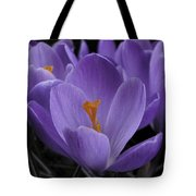 Flower Crocus Tote Bag