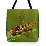 Flower Fly Allograpta Obliqua Tote Bag