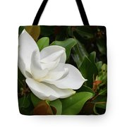 Flowering White Magnolia Blossom On A Magnolia Tree Tote Bag