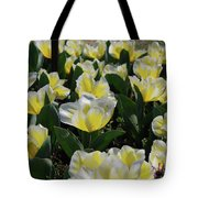 Flowering Yellow And White Tulips In A Spring Garden  Tote Bag