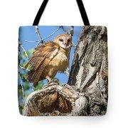 Fluffed Up Barn Owl Owlet Tote Bag