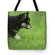 Fluffy Alusky Puppy Stalking In Green Grass Tote Bag