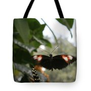 Fly Free - Black, Orange, White Butterfly Tote Bag