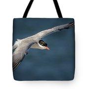 Flying Tern  4691 Tote Bag