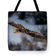 Flying White-tailed Eagle Tote Bag