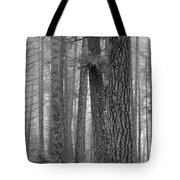 Fog In The Pines Tote Bag