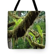 Forest Ferns Art Prints Fern Giclee Prints Baslee Troutman Tote Bag