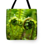 Forest Ferns Fine Art Photography Art Prints Baslee Troutman Tote Bag