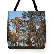 Forest Pine Trees At Sunset Tote Bag
