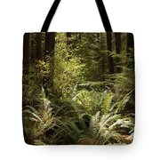 Forest Sunlight And Shadows  Tote Bag