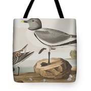 Fork-tailed Gull Tote Bag