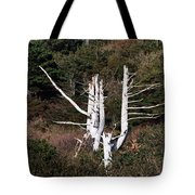 Forms In Nature Tote Bag