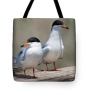 Forster's Terns Tote Bag