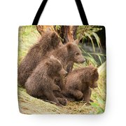 Four Bear Cubs Looking In Same Direction Tote Bag