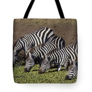 Four For Lunch - Zebras Tote Bag