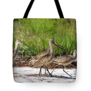 Four Marbled Godwits Tote Bag