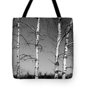 Four Naked Birches Bw Tote Bag