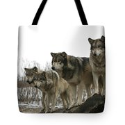 Four Pack Tote Bag
