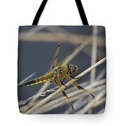 Four Spotted Chaser Tote Bag