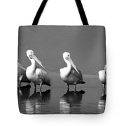 Four White Pelicans In A Funny Pose Tote Bag