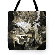Fox Delivering Food To Its Cubs  Tote Bag