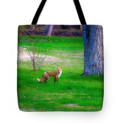 Fox Of Boulder County Tote Bag