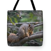 Fox Squirrel On A Branch  Tote Bag