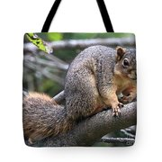 Fox Squirrel On A Branch - Southern Indiana Tote Bag