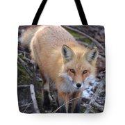 Fox Stare Tote Bag