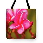 Pink Frangipani Plumeria Flowers Tote Bag