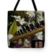 Frangipani Tree And Caterpillar Tote Bag