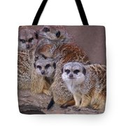 Freezing Meer Cats Tote Bag