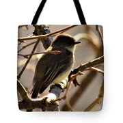 Frenchbroad Flycatcher Tote Bag