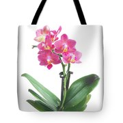 Fresh Pink Orchid In Pot Tote Bag