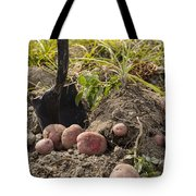 Fresh Red Potatoes On Ground Tote Bag
