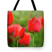 Fresh Spring Tulips Flowers With Water Drops In The Garden  Tote Bag
