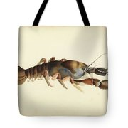 Fresh Water Crayfish Unsigned Sketches Attributed To William Buelow Gould Tote Bag