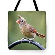 Friendly Female Cardinal  Tote Bag