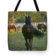 Friesian Horses - Pasture Tote Bag