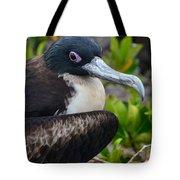 Frigate Bird In Nature Tote Bag