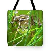 Frog Playing Hide N Seek Tote Bag