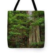 From Grove Of The Patriarchs 2 Tote Bag