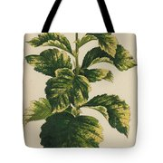 Frosted Thorn, Crataegus Prunifolia Variegata Tote Bag