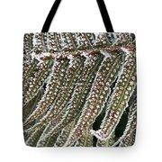 Frosty Fern - 365-322 Tote Bag