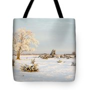 Frosty Solitude Tree In The First Morning Sunshine Tote Bag